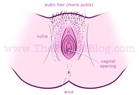 am i normal vaginal opening jpg 697x479