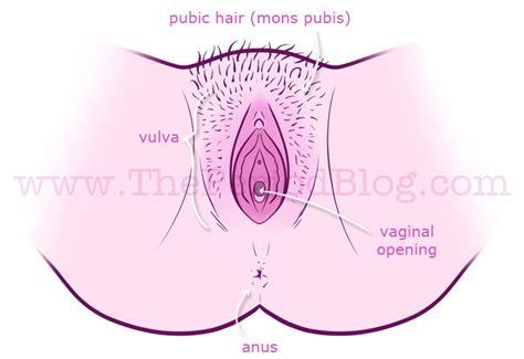 am i normal vaginal opening jpg 697x479
